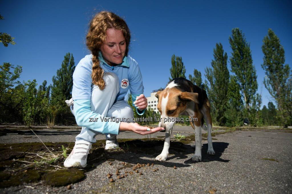 Alesya Lischyshyna von VIER PFOTEN Ukraine beim Füttern eines Streunerhundes - VIER PFOTEN: Die vergessenen Hunde von Tschernobyl (Fotograf: Tomas Halasz / Fotocredit: VIER PFOTEN), © Aussender (16.08.2017)