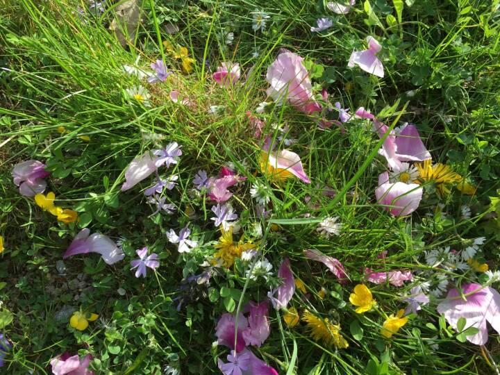 Blume, Wiese, Blumenwiese, Blüten