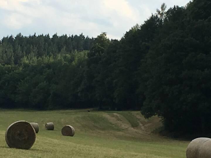 Wald, Heu, Heuballen
