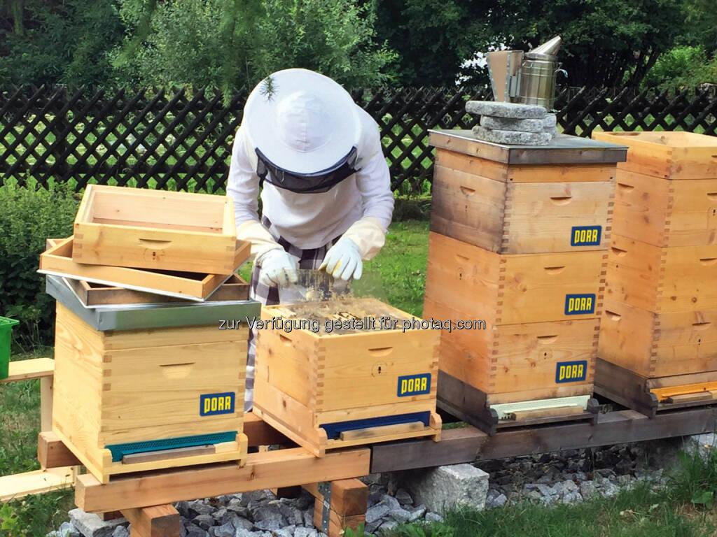 Porr mit Bienen-Initiative bee@PORR, Bild: Porr (28.08.2017)