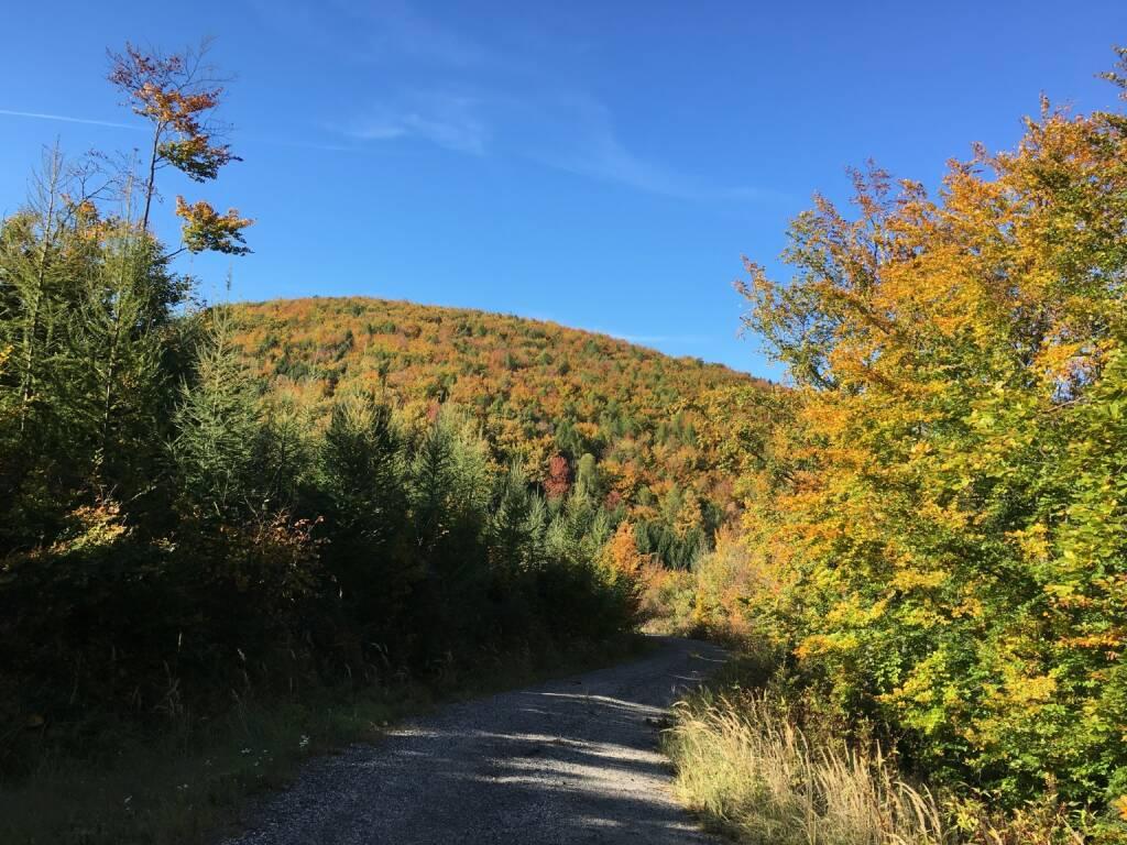 Herbst, Wald, bunt, bunte Blätter, Wienerwald, © diverse photaq (16.10.2017)