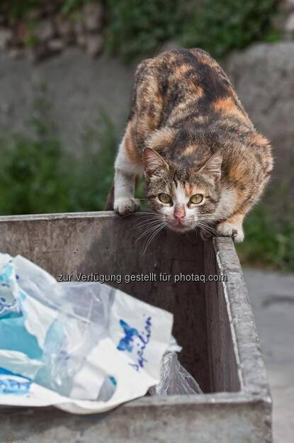 Katze, Müllcontainer; Türkei, Istanbul, © Herlinde Wagner (02.06.2013)