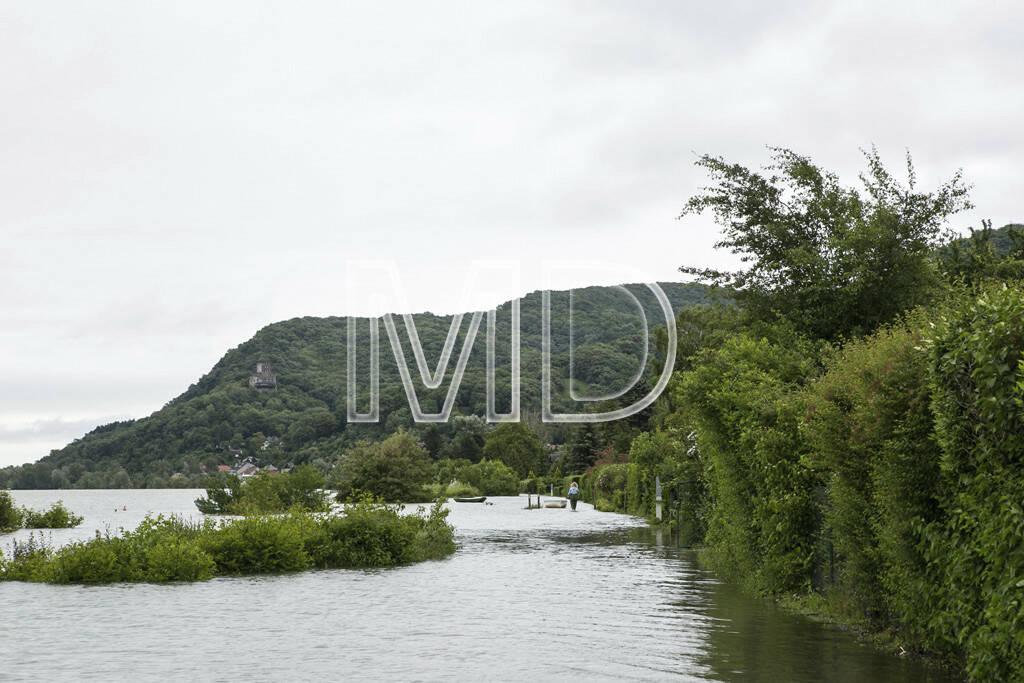 Hochwasser, Greifenstein, © Martina Draper (03.06.2013)