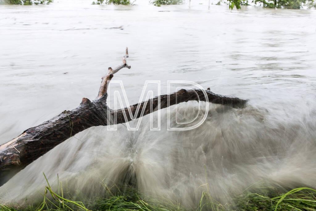Hochwasser, Greifenstein, Ast, © Martina Draper (03.06.2013)