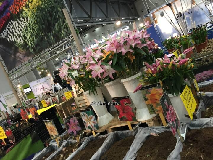 Wohnen & Interieur 2018 Blumen