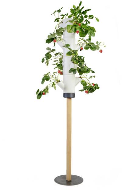 Im Herbst 2017 hat die Gusta Garden GmbH mit PAUL POTATO den weltweit ersten professionellen Kartoffelturm prasentiert und ist damit Anfang dieses Jahres via Kickstarter mit über 1.000 Vorbestellungen erfolgreich in den Markt eingestiegen. Nun folgt mit SISSI STRAWBERRY die zweite Produktlinie des Kärntner Unternehmens und erneut erobert das Produkt die Herzen der internationalen Hobbygärtner. Innerhalb weniger Stunden war das Ziel von EUR 10.000,- auf Kickstarter erreicht, bis 16. November 2018 können die innovativen Erdbeerbäume noch vorbestellt werden. Credit: Gusta Garden (01.10.2018)