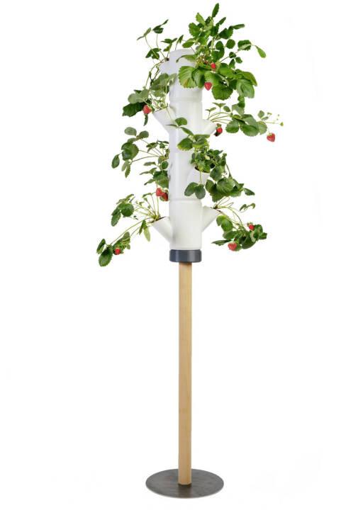 Im Herbst 2017 hat die Gusta Garden GmbH mit PAUL POTATO den weltweit ersten professionellen Kartoffelturm prasentiert und ist damit Anfang dieses Jahres via Kickstarter mit über 1.000 Vorbestellungen erfolgreich in den Markt eingestiegen. Nun folgt mit SISSI STRAWBERRY die zweite Produktlinie des Kärntner Unternehmens und erneut erobert das Produkt die Herzen der internationalen Hobbygärtner. Innerhalb weniger Stunden war das Ziel von EUR 10.000,- auf Kickstarter erreicht, bis 16. November 2018 können die innovativen Erdbeerbäume noch vorbestellt werden. Credit: Gusta Garden