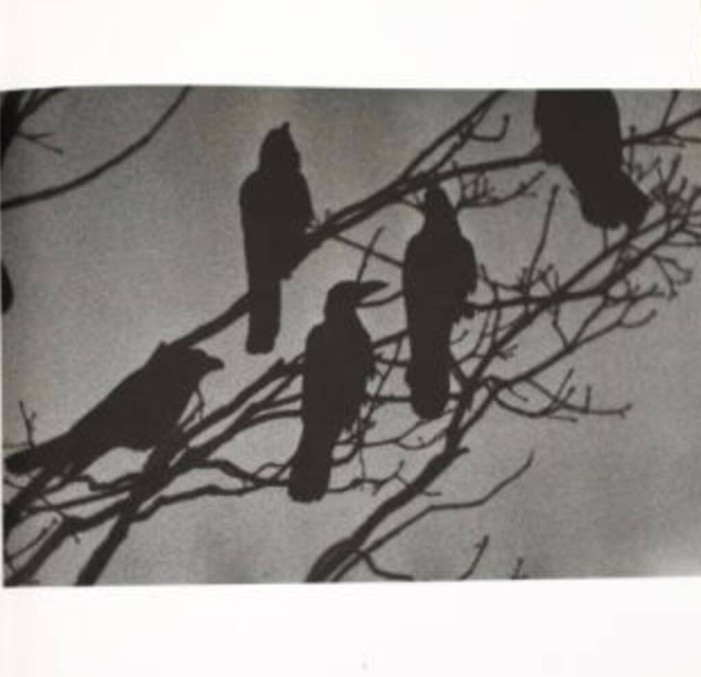 eine Seite aus Masahisa Fukase - Karasu, Ravens, 2000-3500 Euro - http://www.josefchladek.com/book/masahisa_fukase_-_karasu_ravens (07.07.2013)