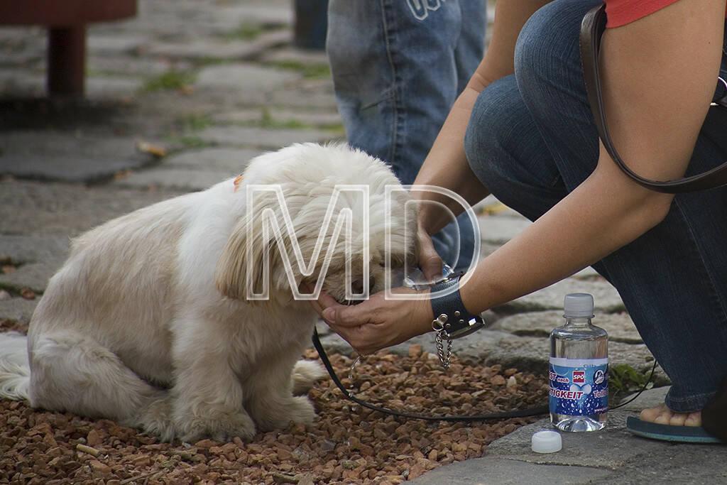 Hund trinkt, © www.martina-draper.at (08.07.2013)