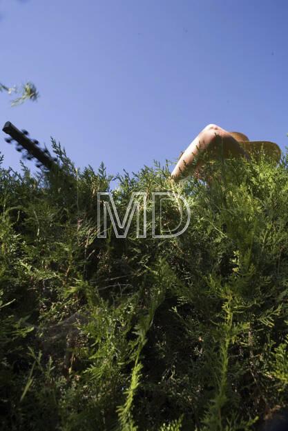 Hecken schneiden, © www.martina-draper.at (08.07.2013)