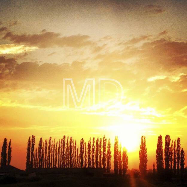Sonnenuntergang, Pappeln, © www.martina-draper.at (08.07.2013)