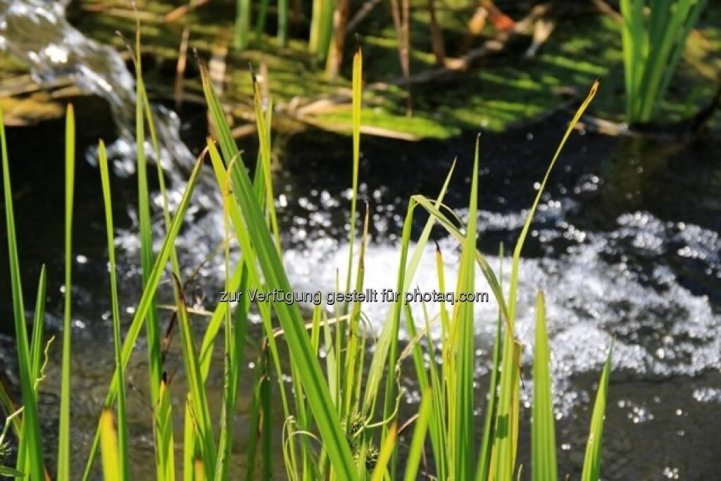 Wasser; Alpbach, © Susanne Lederer-Pabst (10.07.2013)