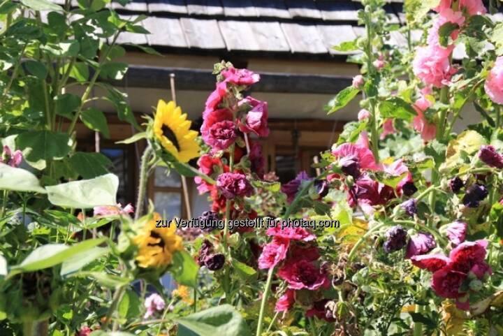 Blumen; Alpbach
