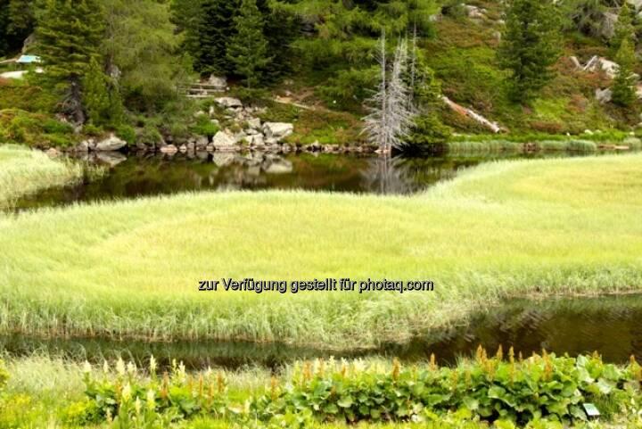 Wasser, Wiese; Alpbach