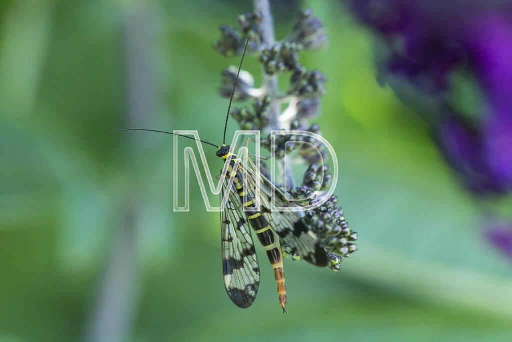 Insekt, © www.martina-draper.at (15.07.2013)