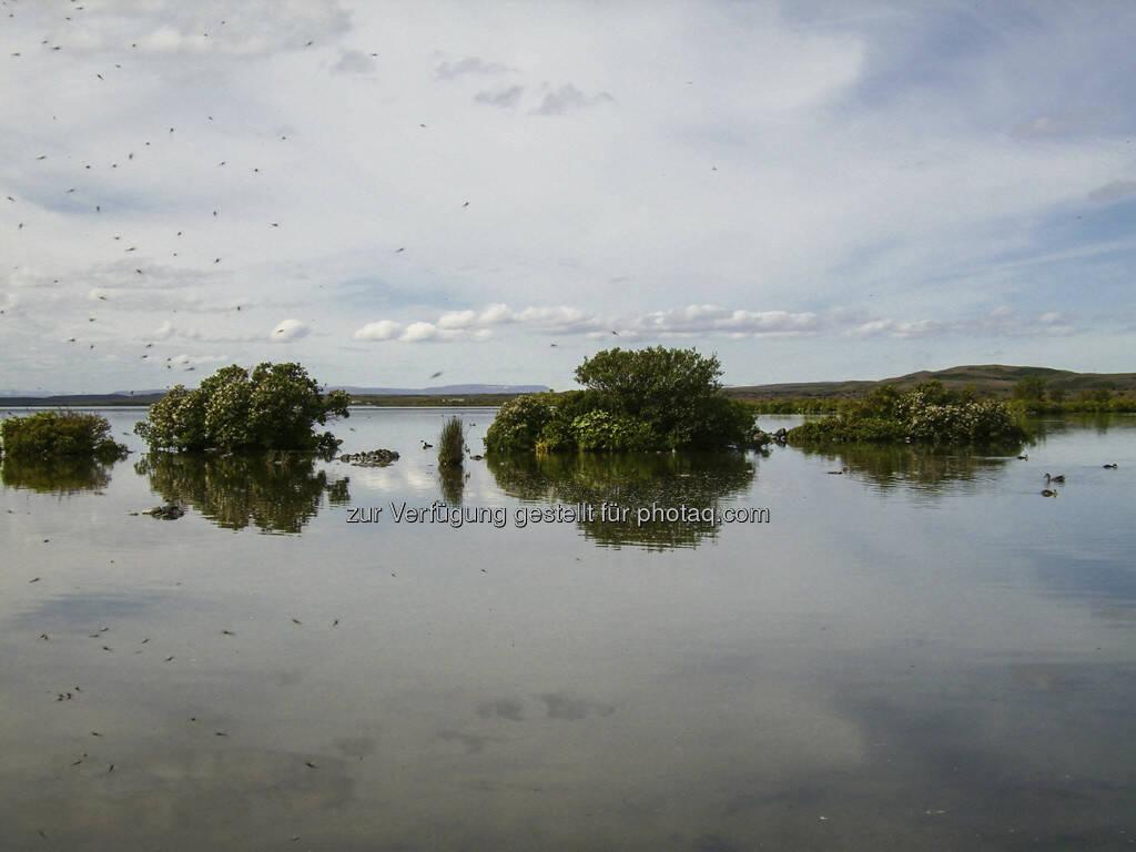 Mückensee - Island, © Gabriele Hartweger (15.07.2013)