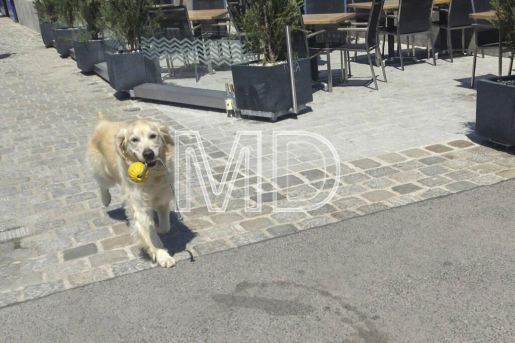 Hund mit Spielzeug, © www.martina-draper.at (01.08.2013)
