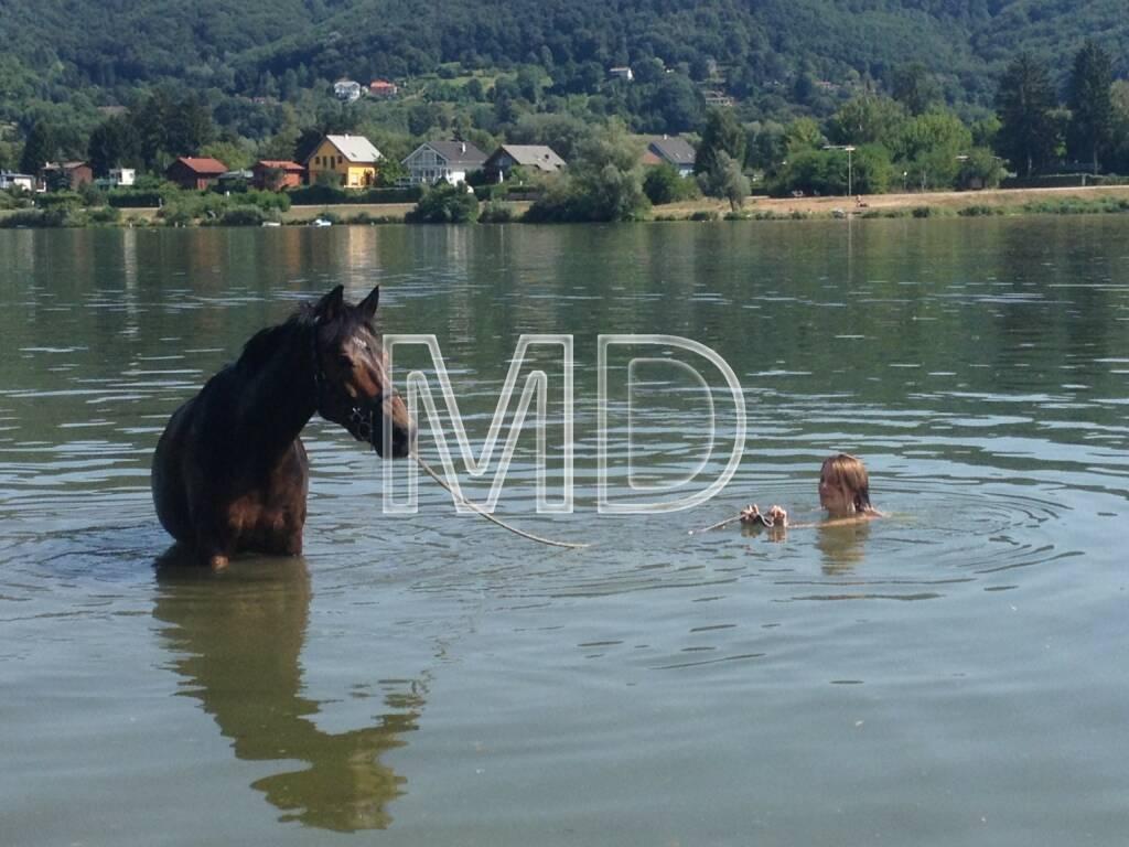 Pferd, Wasser, © www.martina-draper.at (03.08.2013)