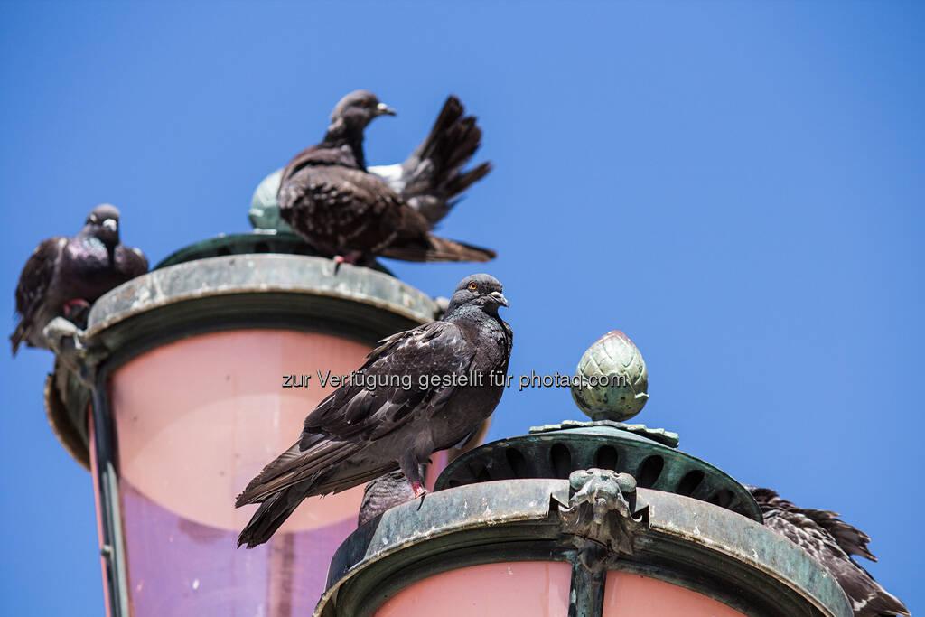 Venedig, Laterne mit Tauben, © Nina Krist (Philoro) (05.08.2013)
