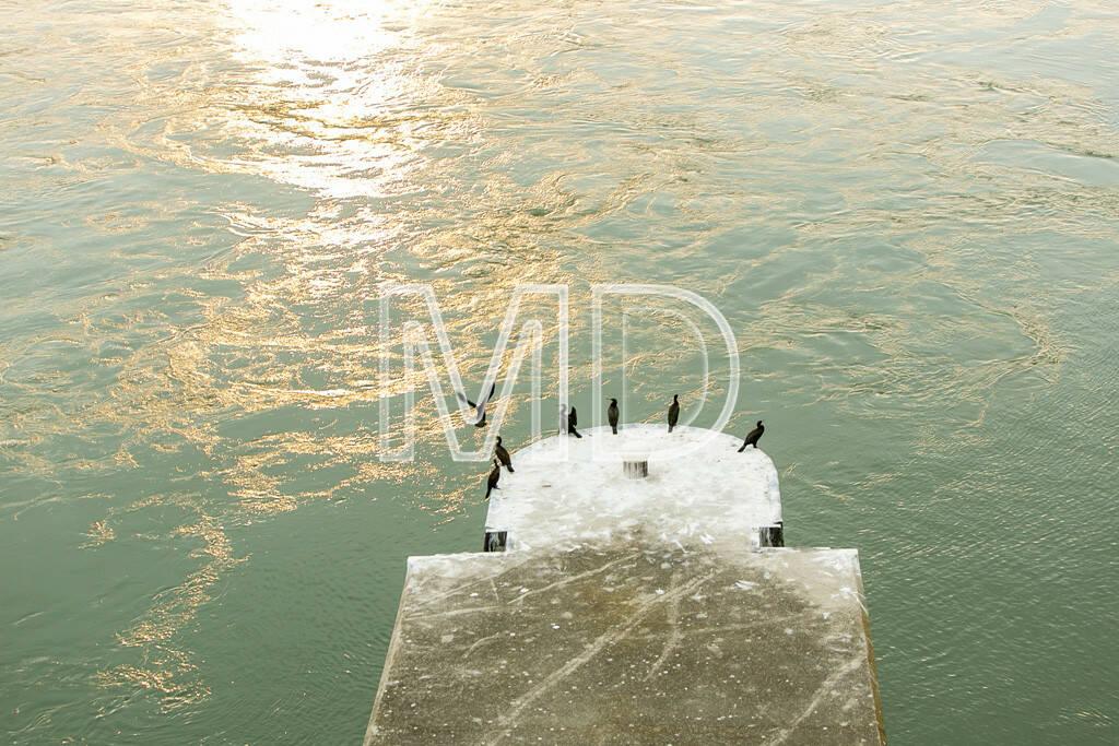 Kormorane, sitzend, Pier, © www.martina-draper.at (09.08.2013)