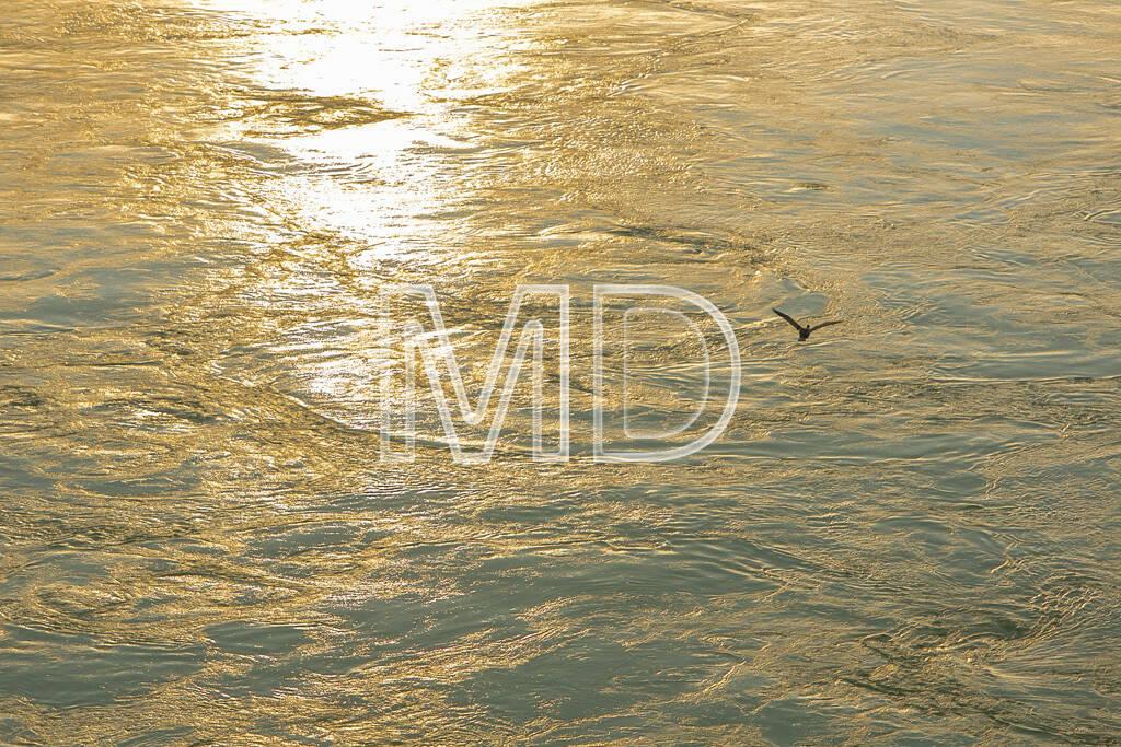 Kormoran, fliegend, © www.martina-draper.at (09.08.2013)
