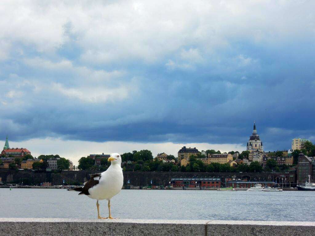 Möwe, Stockholm, © Peter Sitte (14.08.2013)