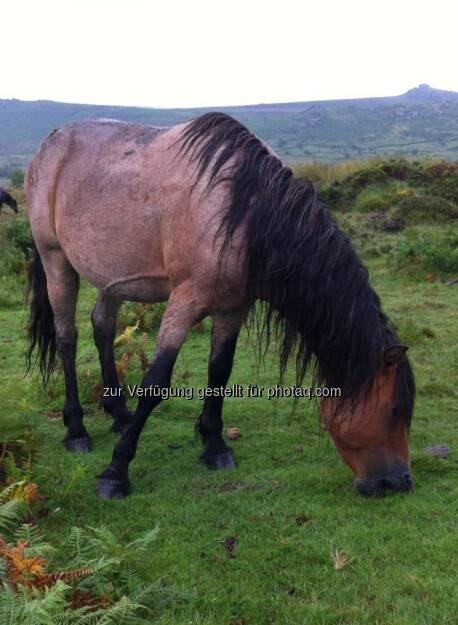 England - Pferd, © Andreas von Richthofen (19.08.2013)