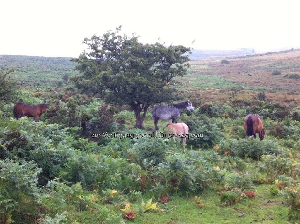 England - Pferde, © Andreas von Richthofen (19.08.2013)