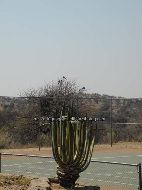 Namibia, Tennisplatz, © Judith Schreiber (24.08.2013)