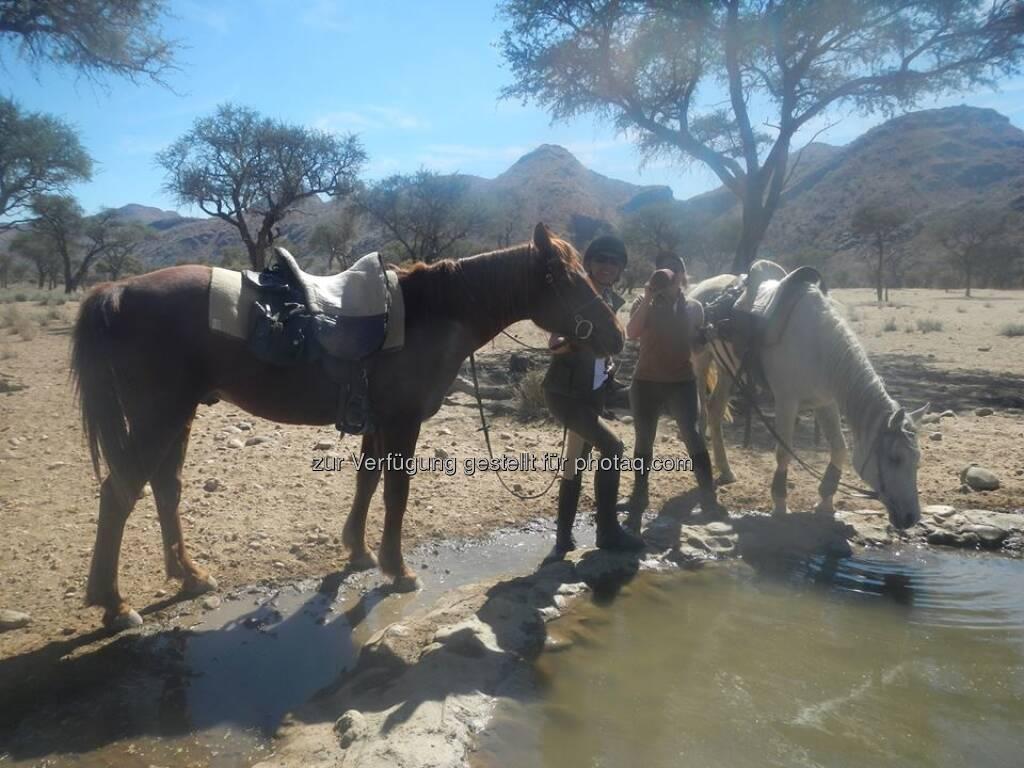 Namibia, Pferde, © Judith Schreiber (24.08.2013)