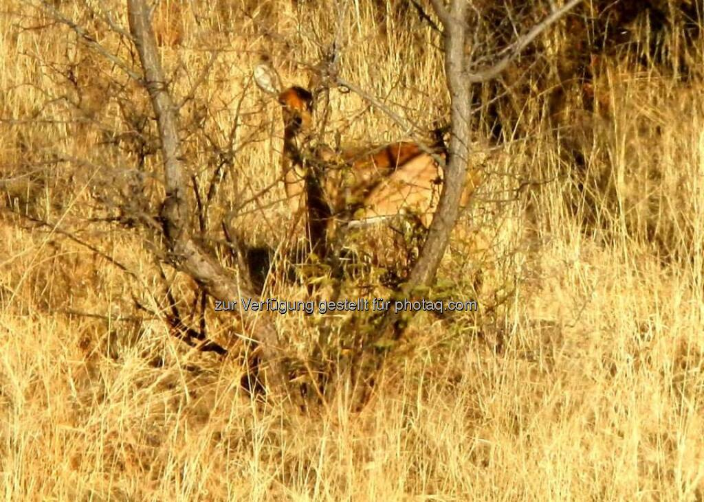 Namibia, © Judith Schreiber (24.08.2013)