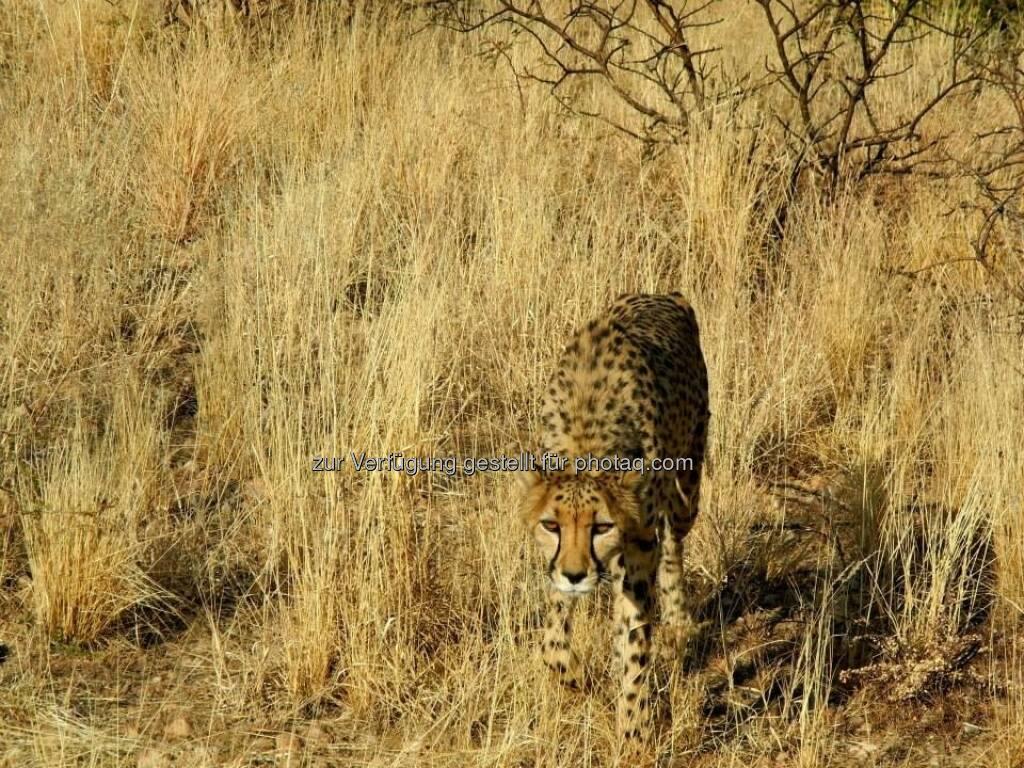 Namibia, Steppe, © Judith Schreiber (24.08.2013)